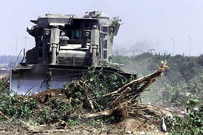 bulldozeringtrees.jpg