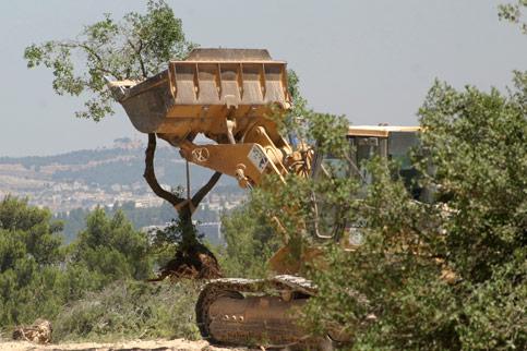 destroyed-trees.jpg