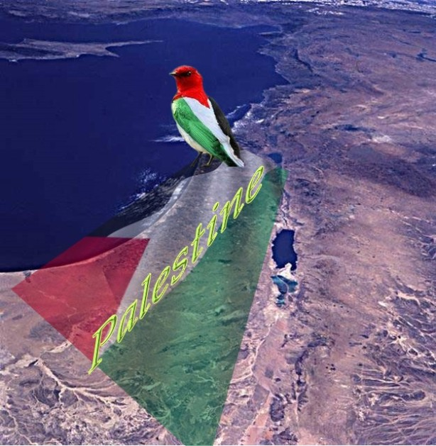 Palestine The Only One State Solution